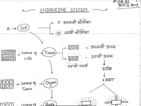 Handwritten Biology Notes